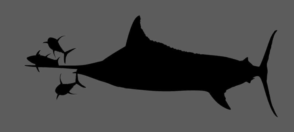 bd marlin bust tuna