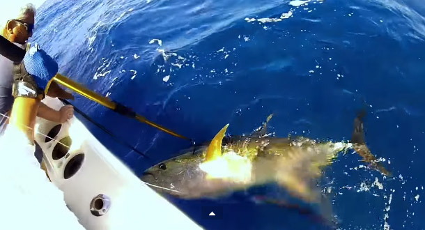 tuna fishing - yellowfin tuna record video