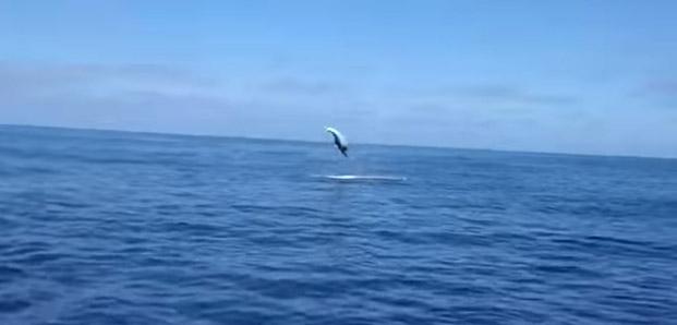 flyfishing shark