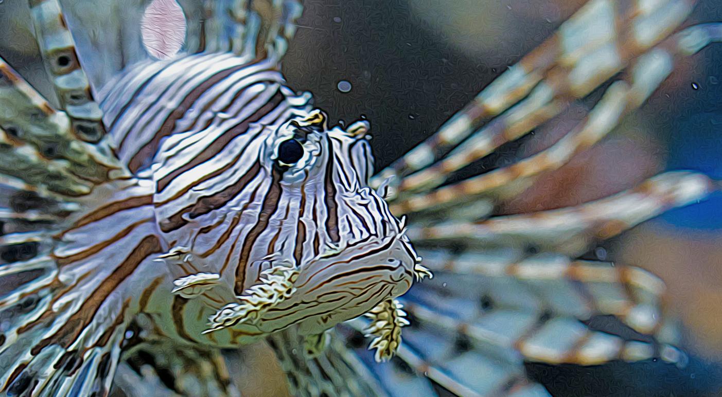 florida lionfish