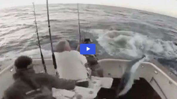 marlin video - marlin jumping