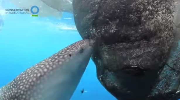 largest fish
