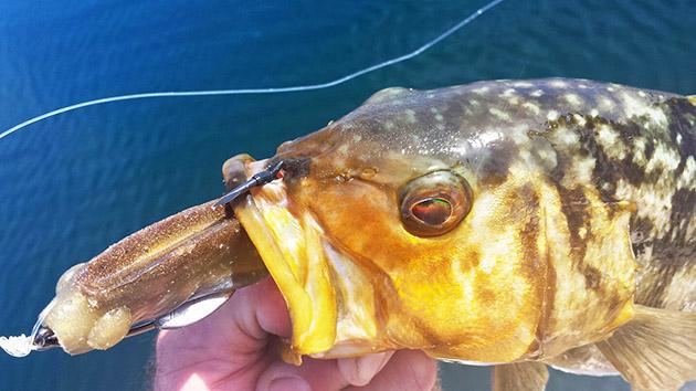 kelp trick