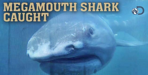 deep sharks