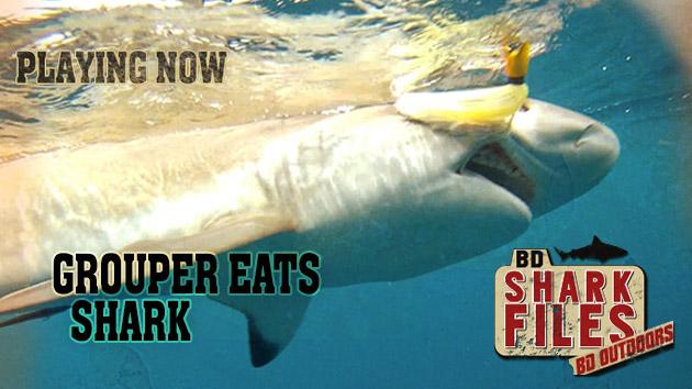 eat shark