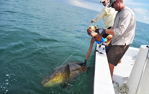 Chasten Whitfield grouper