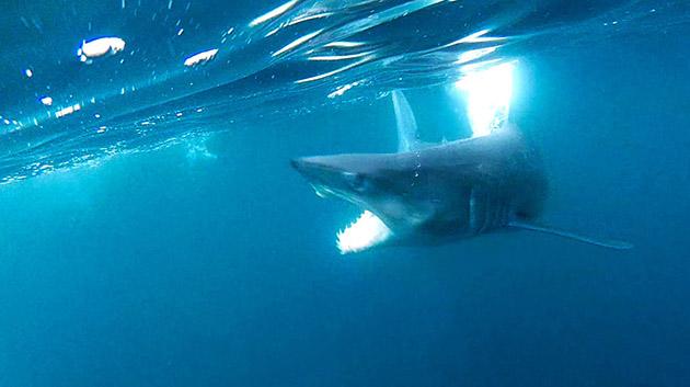 Shark Encounter Matt Watson