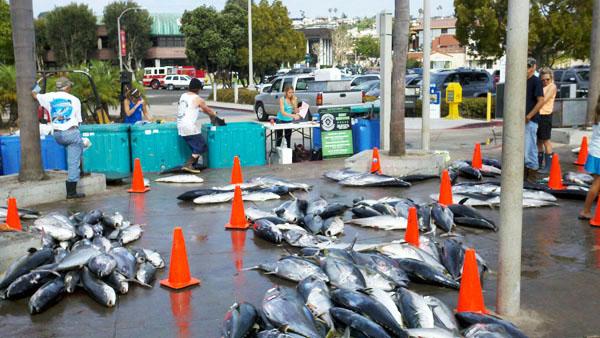 donate fish