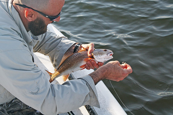 redfish tips