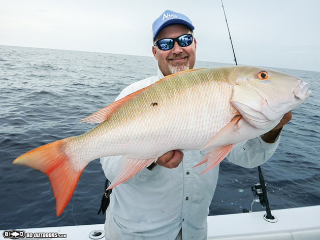 mutton snapper on the reef