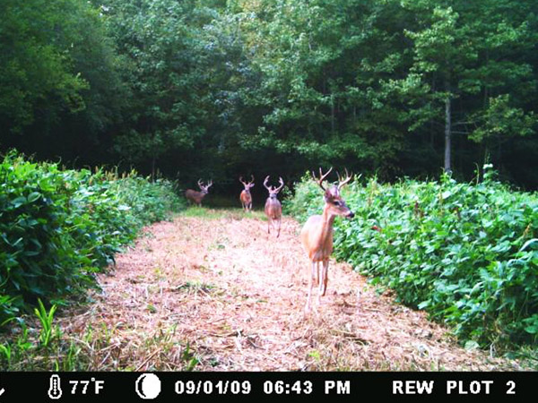 moultrie camera