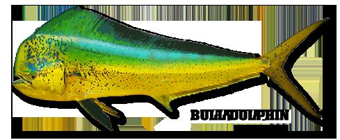 Dorado Dolphin Mahi Mahi