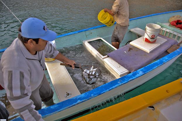 Bait Men Mexico Fishing