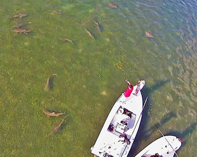 Shark Encounter Mark Zona