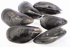 shellfish warning