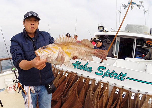 Rockfish dominate counts for Cisco s sportfishing fish count