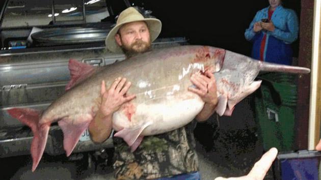 giant paddlefish