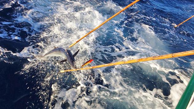 Decent Fishing on Wahoo and Yellowfin