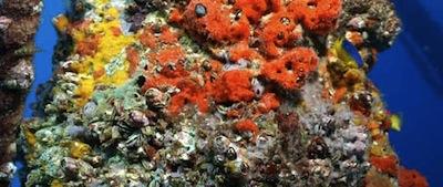 Rigs Reefs gulf mexico