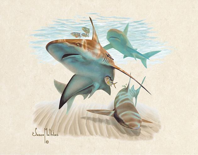 Shark Encounter Jason Mathias