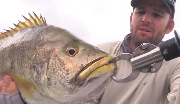 world wide bass fishing