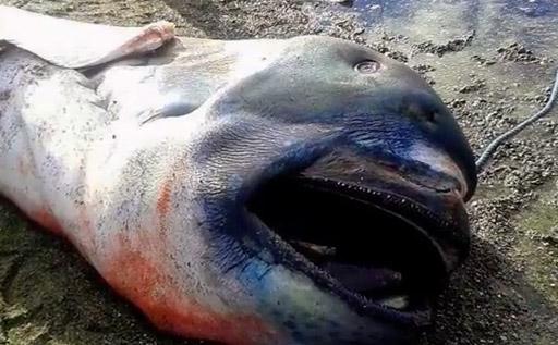 shark deepwater