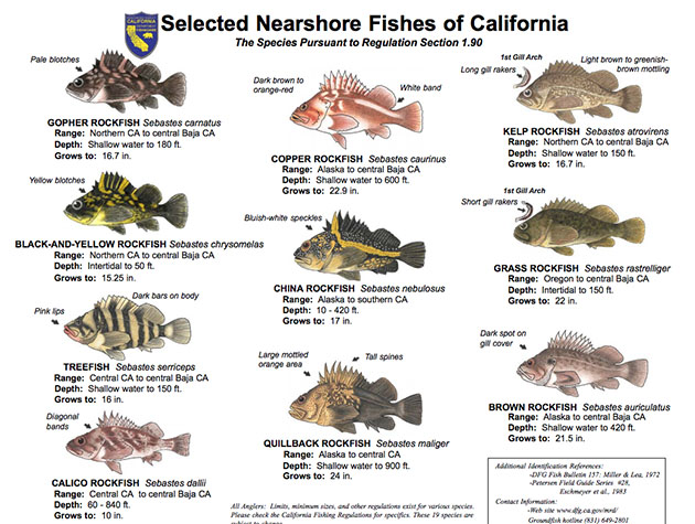New groundfish regulations for ca for Federal fishing regulations