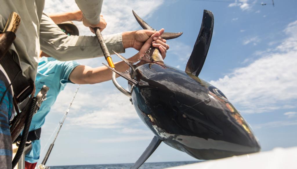 Offshore Fishing Tuna Louisiana