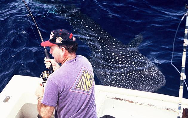 Shark Encounter Capt. Jim Sharpe