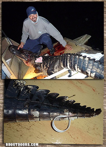 florida gator sword