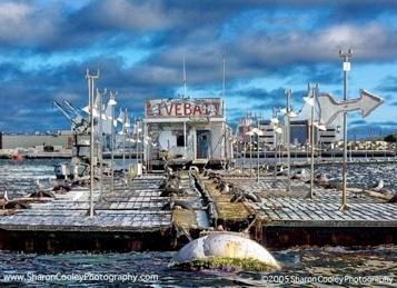 san diego bait barge location