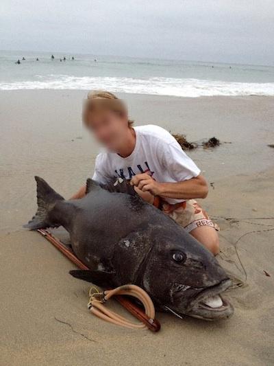 black sea bass poacher spearfishing