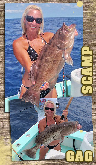 Grouper time tips and tricks to catch more grouper for Fishing season nc