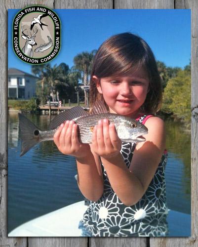florida fish wildlife regulations