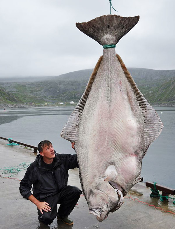 world record halibut