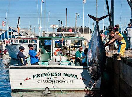 bluefin pei