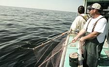 Herring fishing in PEI