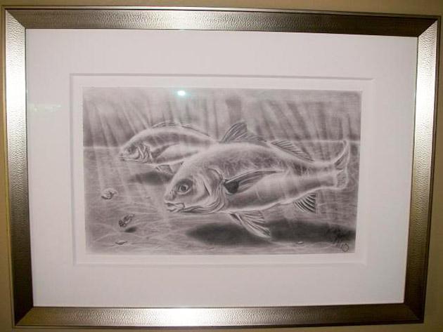 Yellowfin Tuna drawing under-water work