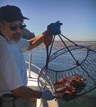 lobstering hoop net