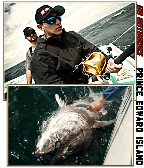 giant bluefin tuna action