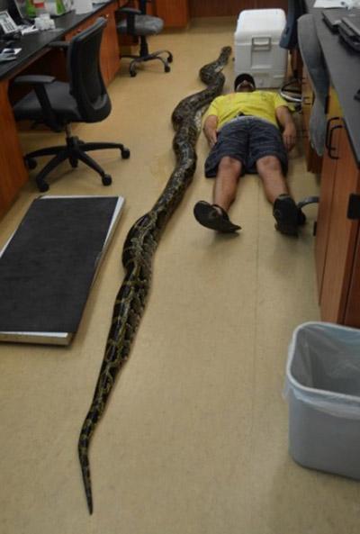 Everglades Python Challenge