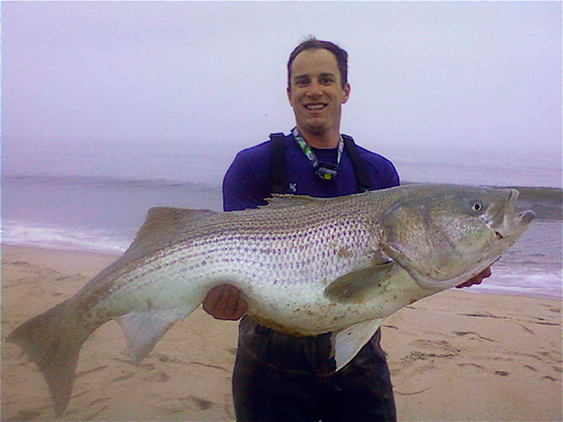 Delaware record striped bass for Surf fishing for stripers