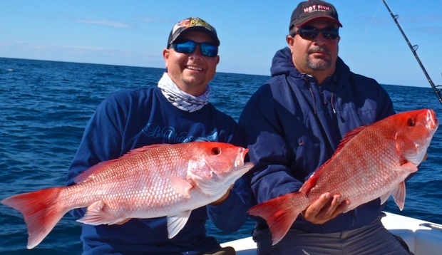 laws rules - Gulf Snapper Conversation