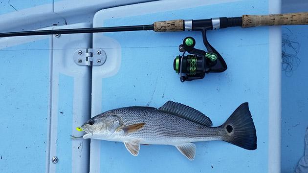 redfish reel
