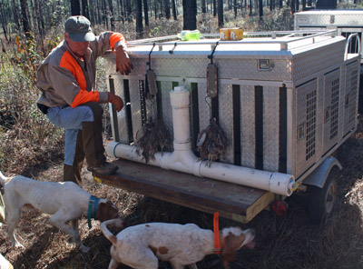 Hunting Dogs Pointers Retrievers