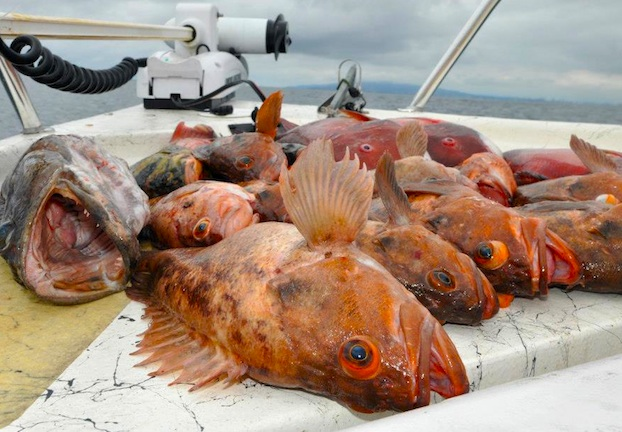2013 calif regulation changes for California fishing regulations