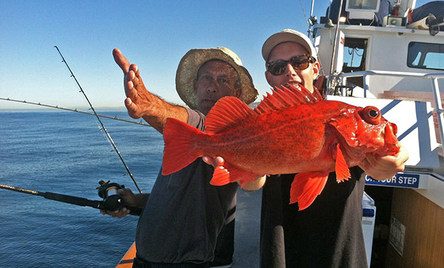 Rockfish Dominate Counts