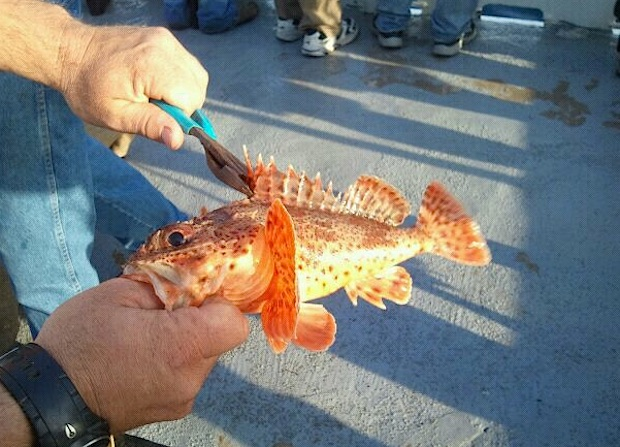 sculpin fishing