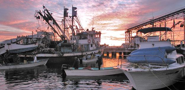 magdalena bay mexico fishing
