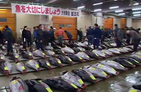 bluefin tuna japan auction